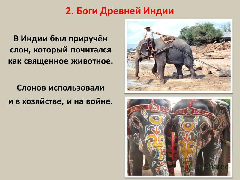 2. Боги Древней Индии В Индии был приручён слон, который почитался как священное животное. Слонов использовали и в хозяйстве, и на войне.