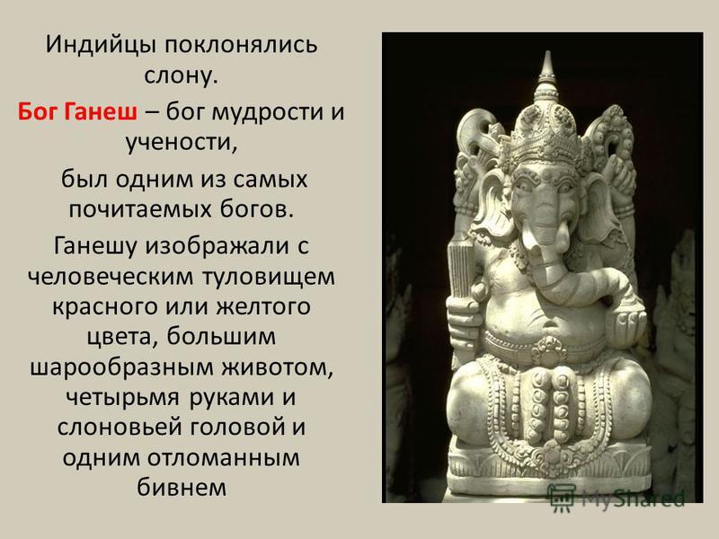 Индийцы поклонялись слону. Бог Ганеш – бог мудрости и учености, был одним из самых почитаемых богов. Ганешу изображали с человеческим туловищем красного или желтого цвета, большим шарообразным животом, четырьмя руками и слоновьей головой и одним отло