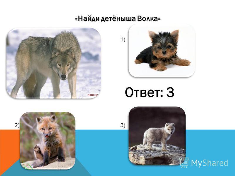 «Найди волчий след!». 1) 2)3) 4) 5) ОТВЕТ:5
