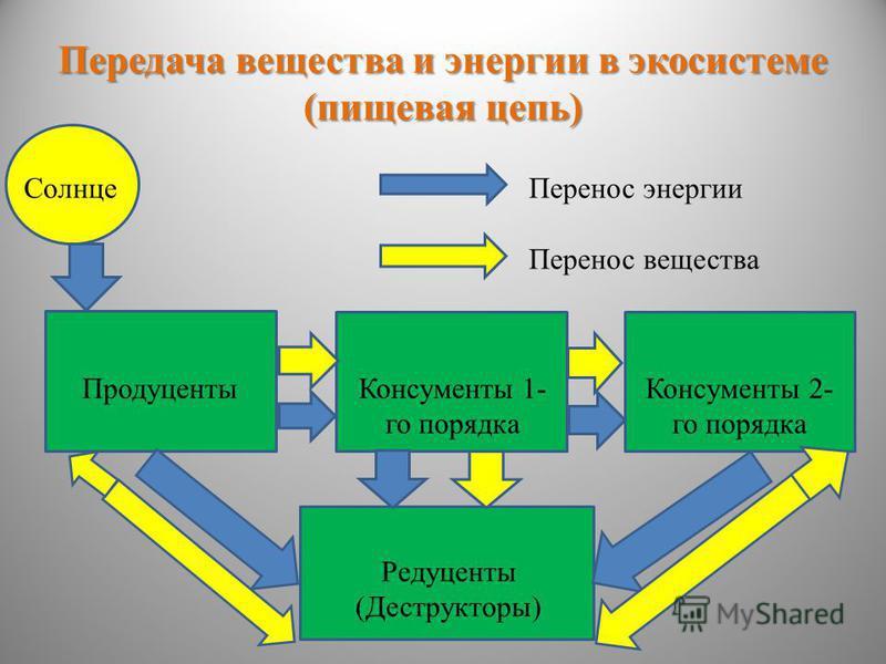 Передача вещества и энергии в экосистеме (пищевая цепь) Солнце Продуценты Консументы 1- го порядка Консументы 2- го порядка Редуценты (Деструкторы) Перенос энергии Перенос вещества