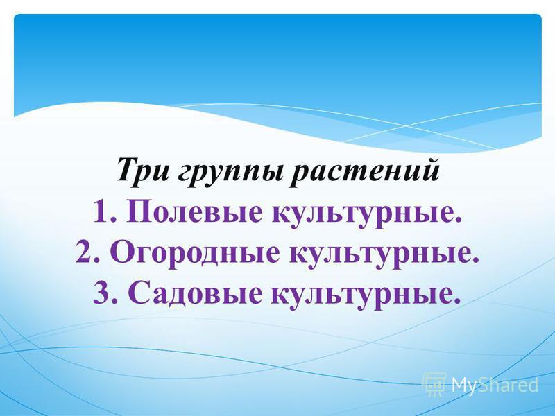 Три группы растений 1. Полевые культурные. 2. Огородные культурные. 3. Садовые культурные.