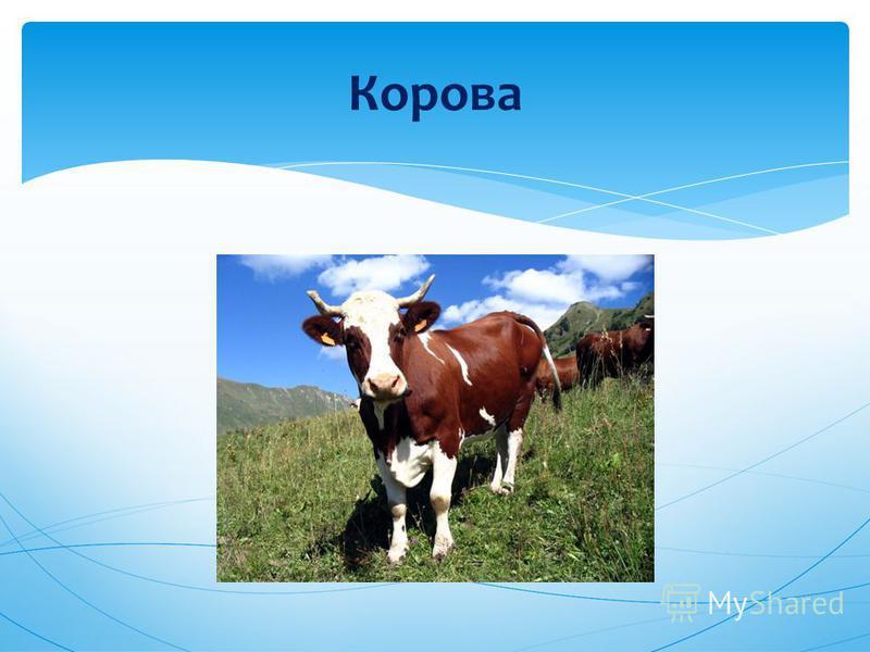 дикие и домашние животные 2 класс окружающий мир презентация