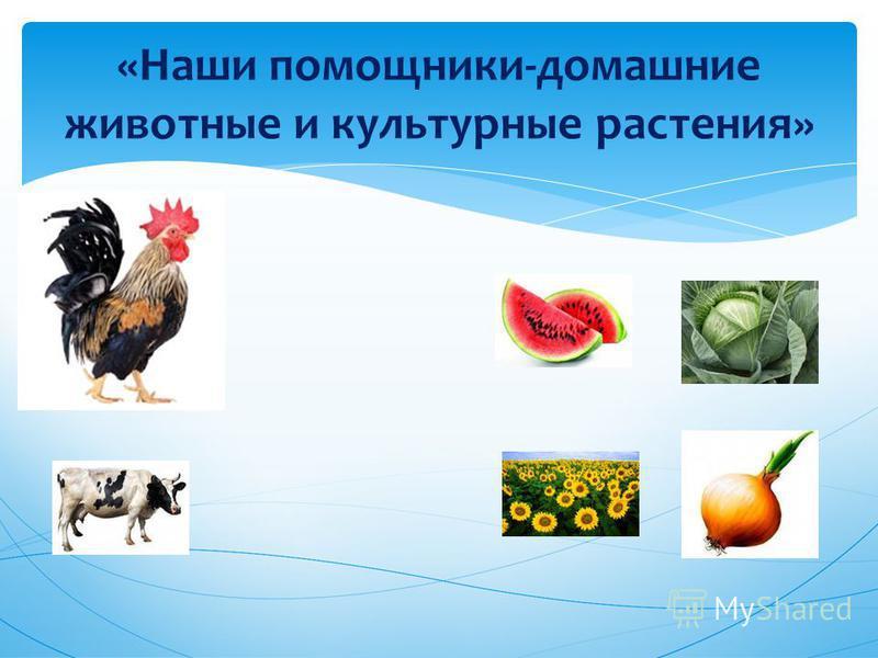 «Наши помощники-домашние животные и культурные растения»