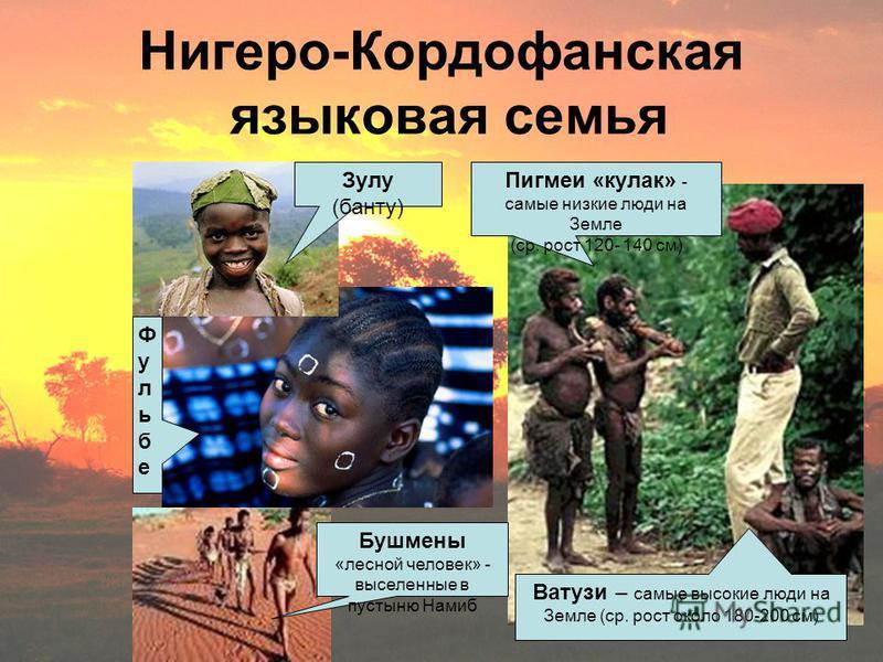 Нигеро-Кордофанская языковая семья Зулу (банту) Пигмеи «кулак» - самые низкие люди на Земле (ср. рост 120- 140 см) Ватузи – самые высокие люди на Земле (ср. рост около 180-200 см) Бушмены «лесной человек» - выселенные в пустыню Намиб Фульбе Фульбе