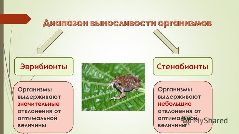 Узкий Широкий Организмы выдерживают значительные отклонения от оптимальной величины Организмы выдерживают небольшие отклонения от оптимальной величины