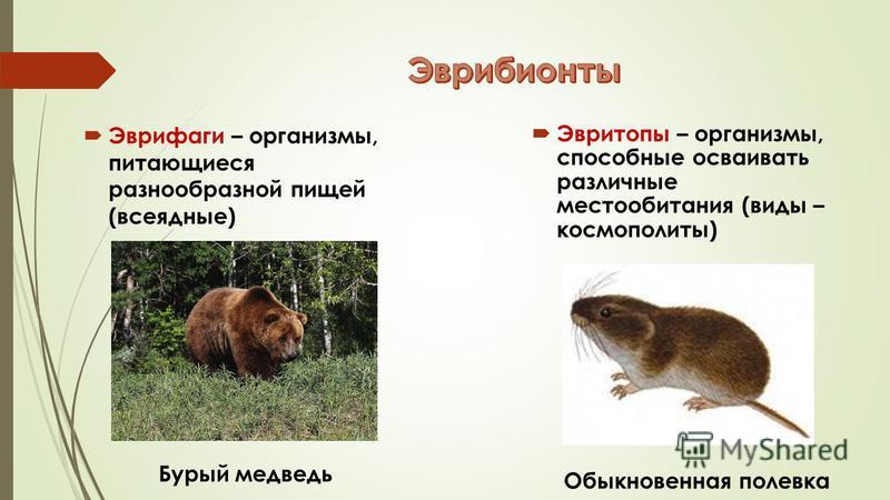 Эврифаги – организмы, питающиеся разнообразной пищей (всеядные) Бурый медведь Эвритопы – организмы, способные осваивать различные местообитания (виды – космополиты) Обыкновенная полевка