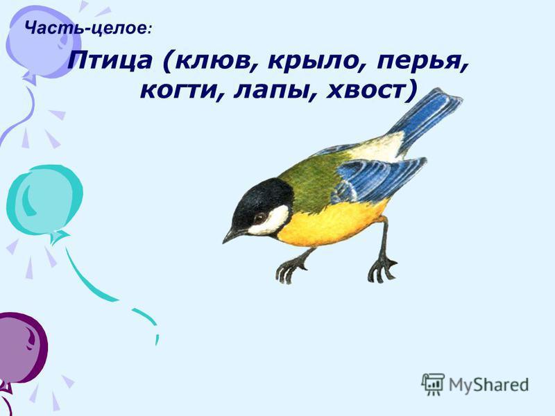 Часть-целое : Птица (клюв, крыло, перья, когти, лапы, хвост)