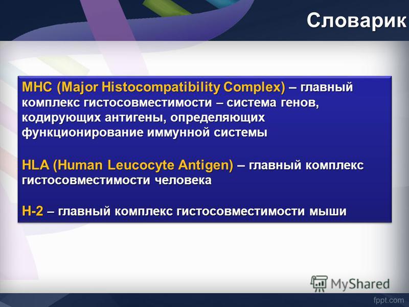 Словарик МНС (Major Histocompatibility Complex) – главный комплекс гистосовместимости – система генов, кодирующих антигены, определяющих функционирование иммунной системы HLA (Human Leucocyte Antigen) – главный комплекс гистосовместимости человека H-