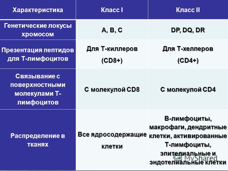 Характеристика Класс IКласс II Генетические локусы хромосом А, В, С DP, DQ, DR Презентация пептидов для Т-лимфоцитов Для Т-киллеров (CD8+) Для Т-хелперов (CD4+) Связывание с поверхностными молекулами Т- лимфоцитов С молекулой CD8 С молекулой CD4 Расп