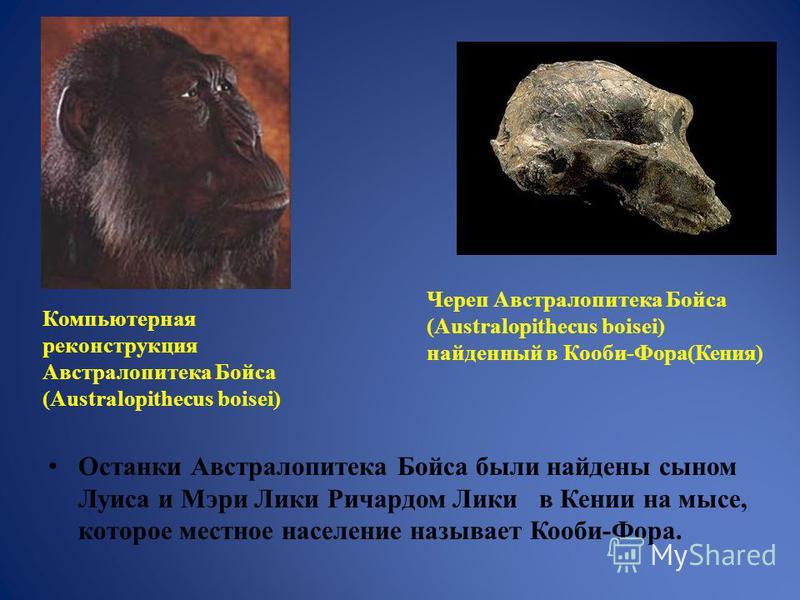 Останки Австралопитека Бойса были найдены сыном Луиса и Мэри Лики Ричардом Лики в Кении на мысе, которое местное население называет Кооби-Фора. Компьютерная реконструкция Австралопитека Бойса (Australopithecus boisei) Череп Австралопитека Бойса (Aust