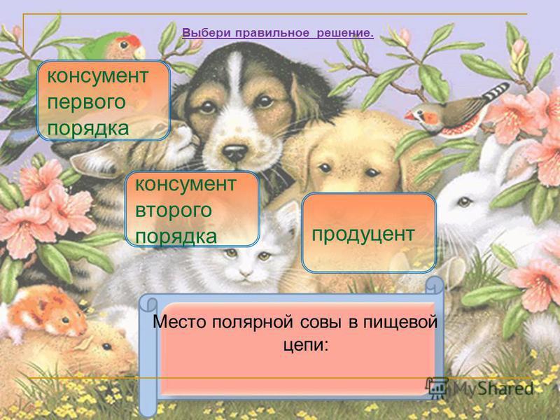 Место полярной совы в пищевой цепи: консумент второго порядка продуцент Выбери правильное решение. консумент первого порядка