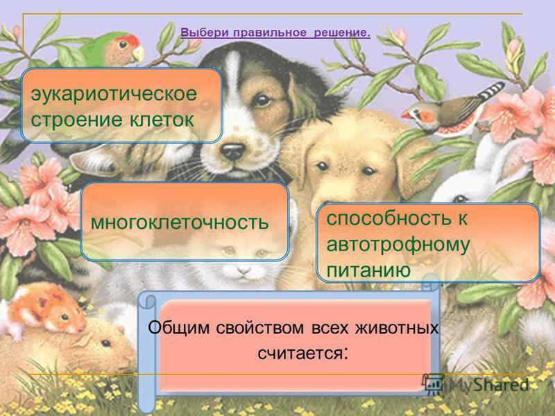 Общим свойством всех животных считается : эукариотическое строение клеток способность к автотрофному питанию Выбери правильное решение. многоклеточность