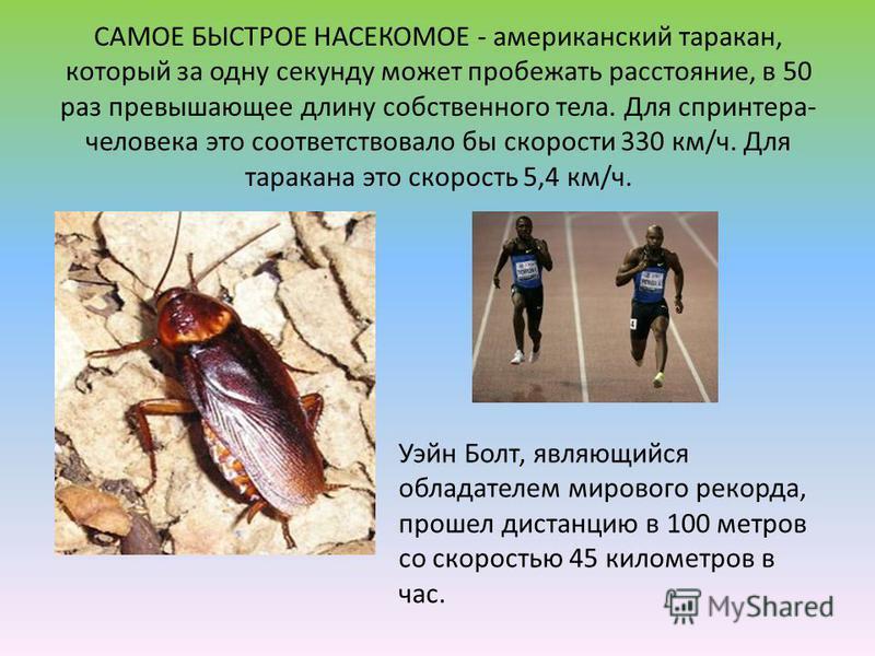 САМОЕ БЫСТРОЕ НАСЕКОМОЕ - американский таракан, который за одну секунду может пробежать расстояние, в 50 раз превышающее длину собственного тела. Для спринтера- человека это соответствовало бы скорости 330 км/ч. Для таракана это скорость 5,4 км/ч. Уэ