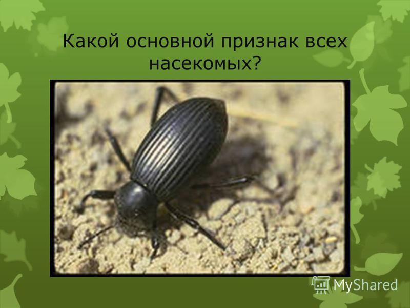 Назови части тела насекомых.