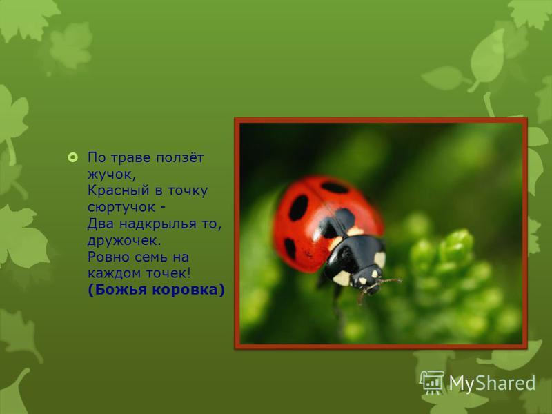 На цветке сидит цветочек, В два всего лишь лепесточка. Лепестки цветные, По краям резные! Посидит и улетает. Если кто не угадает, То подскажет мамочка: Да ведь это....(Бабочка)