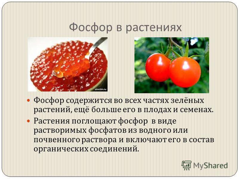 Фосфор в растениях Фосфор содержится во всех частях зелёных растений, ещё больше его в плодах и семенах. Растения поглощают фосфор в виде растворимых фосфатов из водного или почвенного раствора и включают его в состав органических соединений.