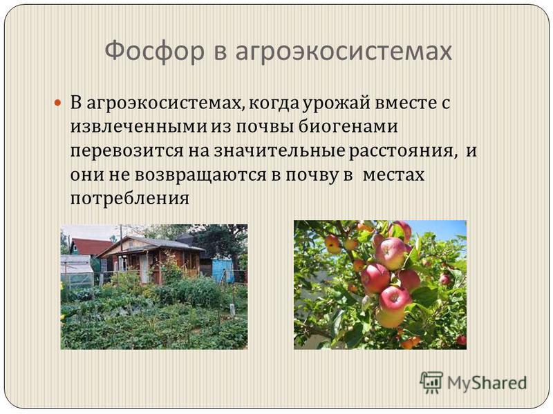 Фосфор в агроэкосистемах В агроэкосистемах, когда урожай вместе с извлеченными из почвы биогенами перевозится на значительные расстояния, и они не возвращаются в почву в местах потребления