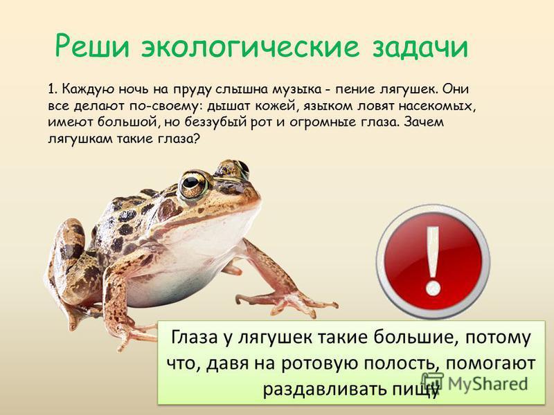 Реши экологические задачи 1. Каждую ночь на пруду слышна музыка - пение лягушек. Они все делают по-своему: дышат кожей, языком ловят насекомых, имеют большой, но беззубый рот и огромные глаза. Зачем лягушкам такие глаза? Глаза у лягушек такие больши