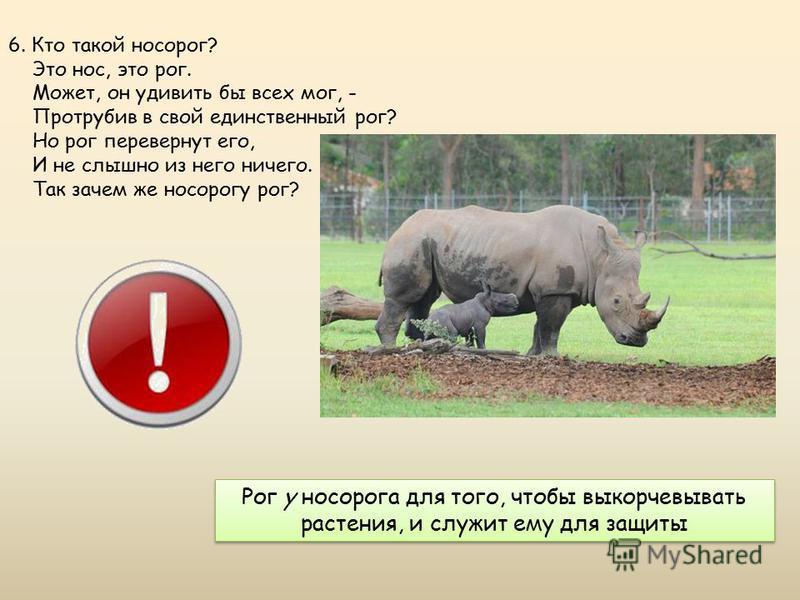 Рог у носорога для того, чтобы выкорчевывать растения, и служит ему для защиты 6. Кто такой носорог? Это нос, это рог. Может, он удивить бы всех мог, - Протрубив в свой единственный рог? Но рог перевернут его, И не слышно из него ничего. Так зачем ж