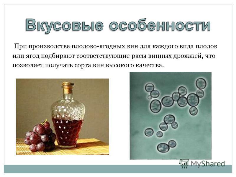 При производстве плодово-ягодных вин для каждого вида плодов или ягод подбирают соответствующие расы винных дрожжей, что позволяет получать сорта вин высокого качества.