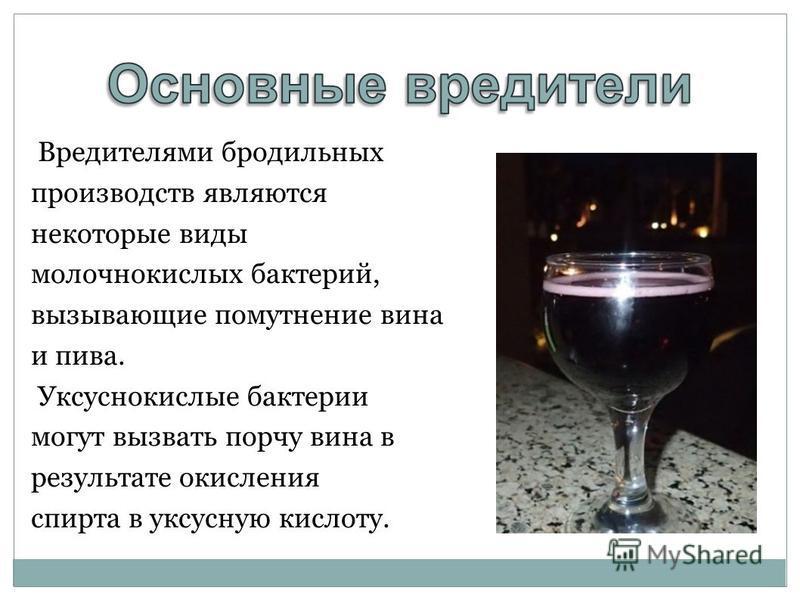 Вредителями бродильных производств являются некоторые виды молочнокислых бактерий, вызывающие помутнение вина и пива. Уксуснокислые бактерии могут вызвать порчу вина в результате окисления спирта в уксусную кислоту.