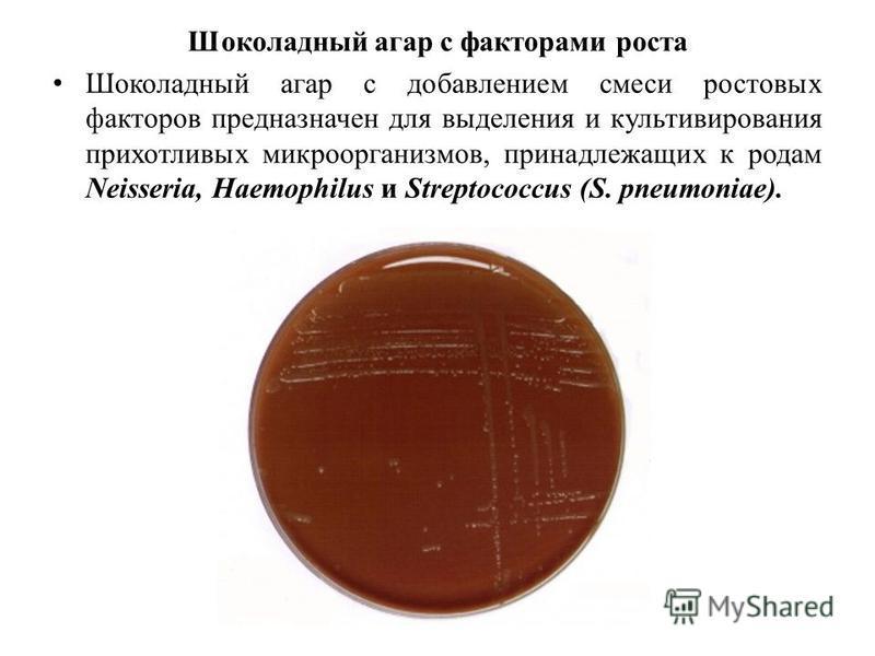 Шоколадный агар с факторами роста Шоколадный агар с добавлением смеси ростовых факторов предназначен для выделения и культивирования прихотливых микроорганизмов, принадлежащих к родам Neisseria, Haemophilus и Streptococcus (S. pneumoniae).