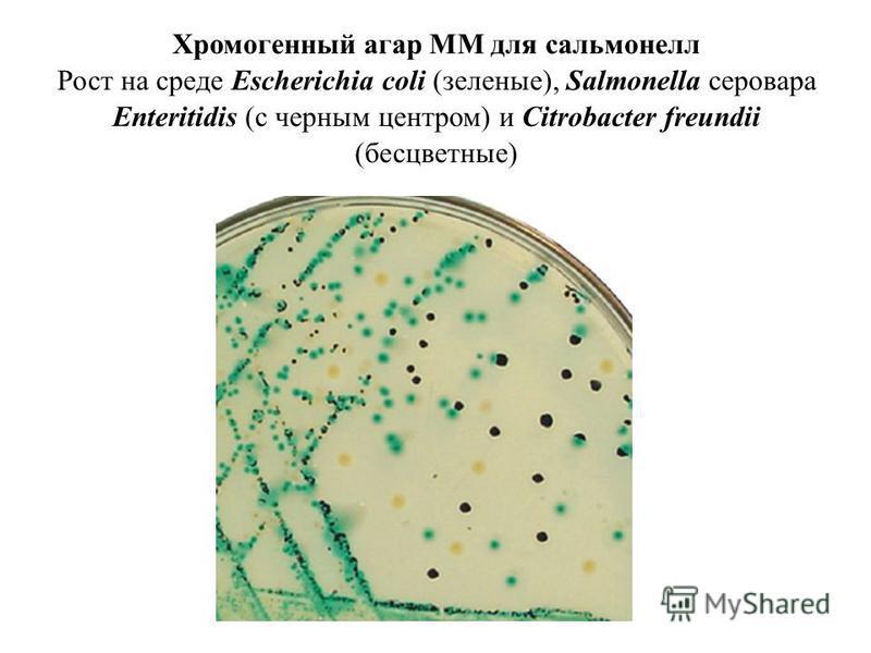 Хромогенный агар MМ для сальмонелл Рост на среде Escherichia coli (зеленые), Salmonella серовара Enteritidis (с черным центром) и Citrobacter freundii (бесцветные)
