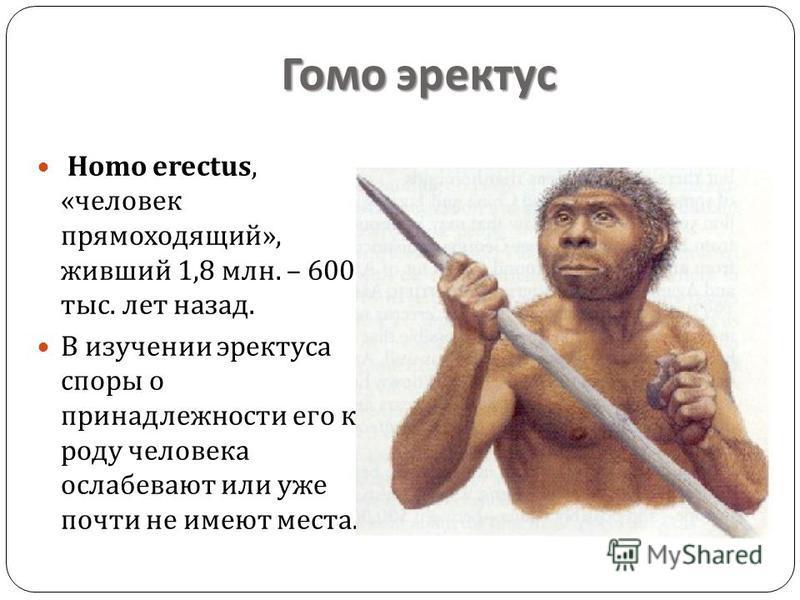 Гомо эректус Homo erectus, « человек прямоходящий », живший 1,8 млн. – 600 тыс. лет назад. В изучении эректуса споры о принадлежности его к роду человека ослабевают или уже почти не имеют места.