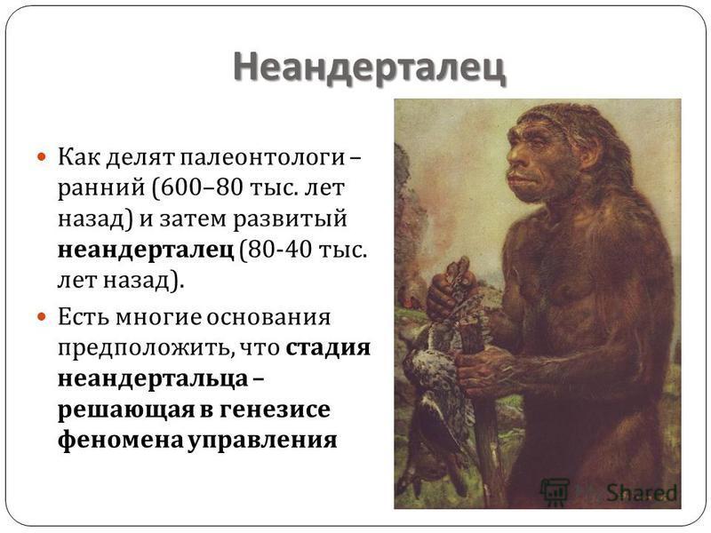 Неандерталец Как делят палеонтологи – ранний (600–80 тыс. лет назад ) и затем развитый неандерталец (80-40 тыс. лет назад ). Есть многие основания предположить, что стадия неандертальца – решающая в генерисе феномена управления