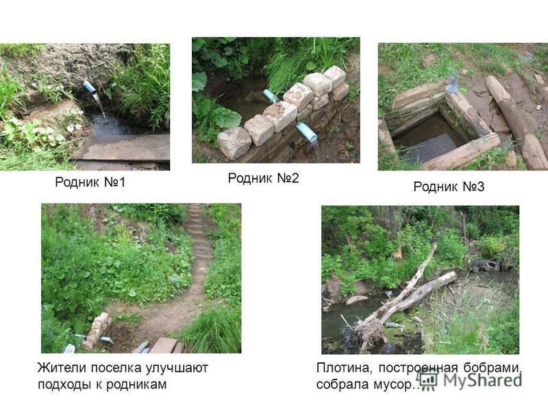 Родник 1 Родник 2 Родник 3 Жители поселка улучшают подходы к родникам Плотина, построенная бобрами, собрала мусор…