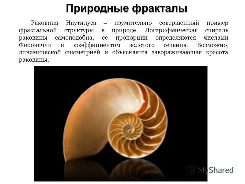 Природные фракталы Раковина Наутилуса – изумительно совершенный пример фрактальной структуры в природе. Логарифмическая спираль раковины самоподобна, ее пропорции определяются числами Фибоначчи и коэффициентом золотого сечения. Возможно, динамической