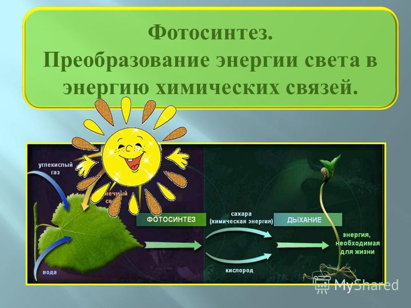 Фотосинтез. Преобразование энергии света в энергию химических связей.