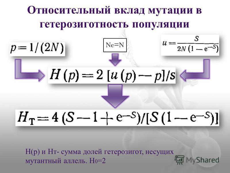 Относительный вклад мутации в гетерозиготность популяции Ne=N H(p) и Hт- сумма долей гетерозигот, несущих мутантный аллель. H 0 =2