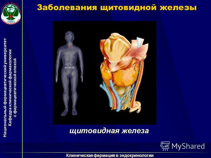 Национальный фармацевтический университет Кафедра клинической фармакологии с фармацевтической опекой Клиническая фармация в эндокринологии Заболевания щитовидной железы щитовидная железа