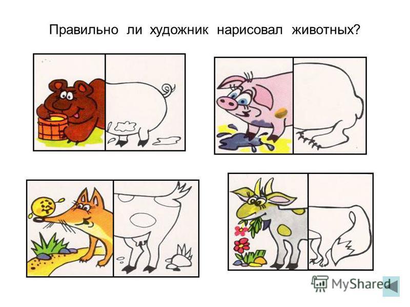 Правильно ли художник нарисовал животных?