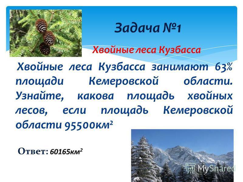 Хвойные леса Кузбасса Хвойные леса Кузбасса занимают 63% площади Кемеровской области. Узнайте, какова площадь хвойных лесов, если площадь Кемеровской области 95500 км 2 Задача 1 Ответ: 60165 км 2