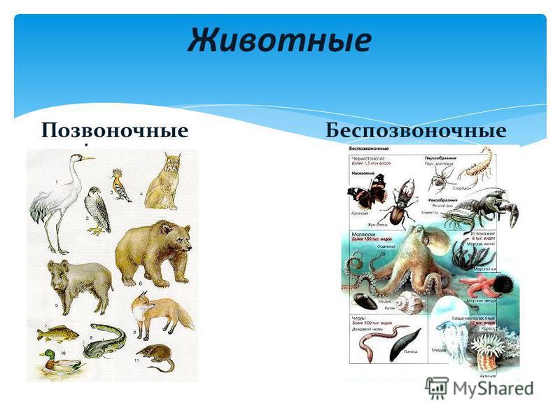 . Животные Позвоночные Беспозвоночные
