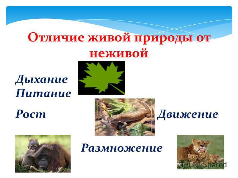 Отличие живой природы от неживой Дыхание Питание Рост Движение Размножение