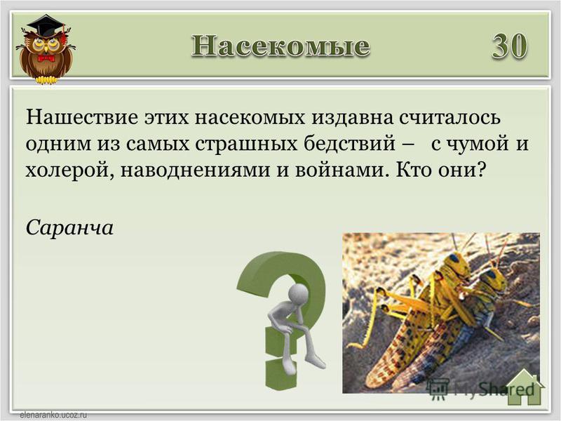 Саранча Нашествие этих насекомых издавна считалось одним из самых страшных бедствий – с чумой и холерой, наводнениями и войнами. Кто они?