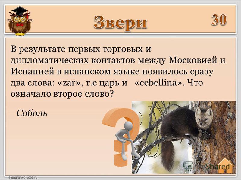 Соболь В результате первых торговых и дипломатических контактов между Московией и Испанией в испанском языке появилось сразу два слова: «zar», т.е царь и «cebellina». Что означало второе слово?