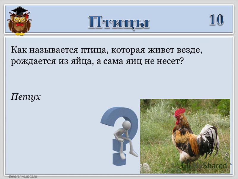 Петух Как называется птица, которая живет везде, рождается из яйца, а сама яиц не несет?
