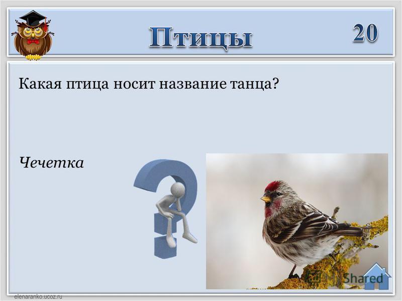 Чечетка Какая птица носит название танца?