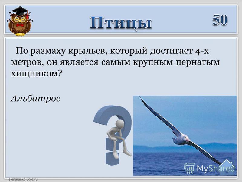 Альбатрос По размаху крыльев, который достигает 4-х метров, он является самым крупным пернатым хищником?