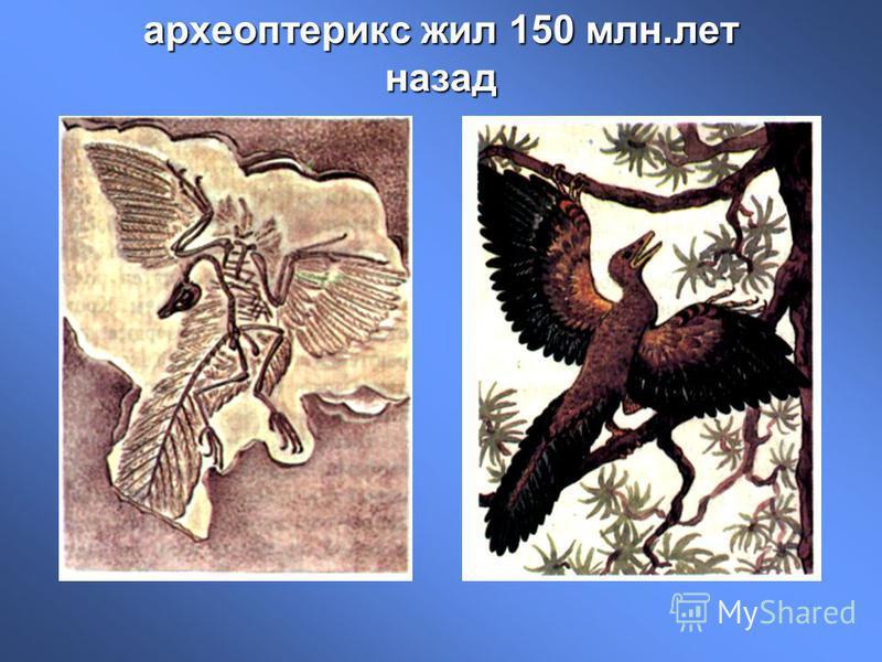 археоптерикс жил 150 млн.лет назад