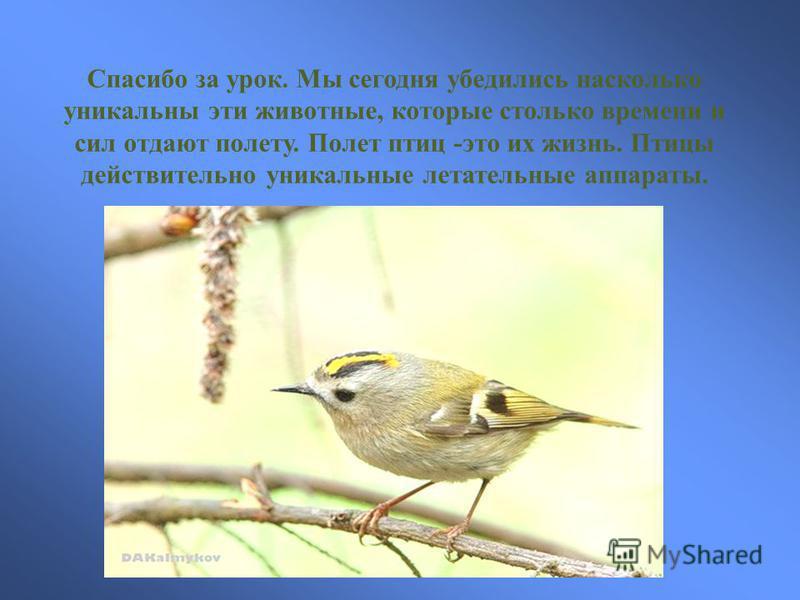 Спасибо за урок. Мы сегодня убедились насколько уникальны эти животные, которые столько времени и сил отдают полету. Полет птиц -это их жизнь. Птицы действительно уникальные летательные аппараты.