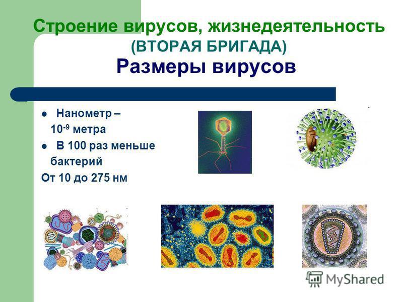 Строение вирусов, жизнедеятельность (ВТОРАЯ БРИГАДА) Размеры вирусов Нанометр – 10 -9 метра В 100 раз меньше бактерий От 10 до 275 нм