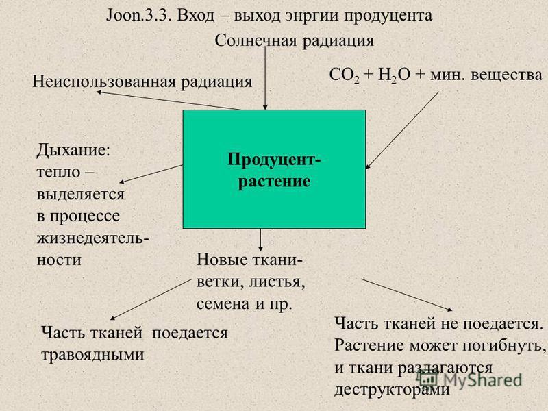 Продуцент- растение Солнечная радиация Неиспользованная радиация CO 2 + H 2 O + мин. вещества Дыхание: тепло – выделяется в процессе жизнедеятельности Новые ткани- ветки, листья, семена и пр. Часть тканей поедается травоядными Часть тканей не поедает