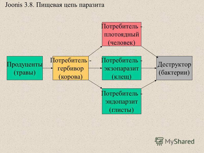 Эндопаразит фото