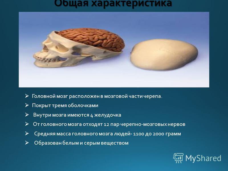 Общая характеристика Головной мозг расположен в мозговой части черепа. Покрыт тремя оболочками Внутри мозга имеются 4 желудочка От головного мозга отходят 12 пар черепно-мозговых нервов Средняя масса головного мозга людей- 1100 до 2000 грамм Образова
