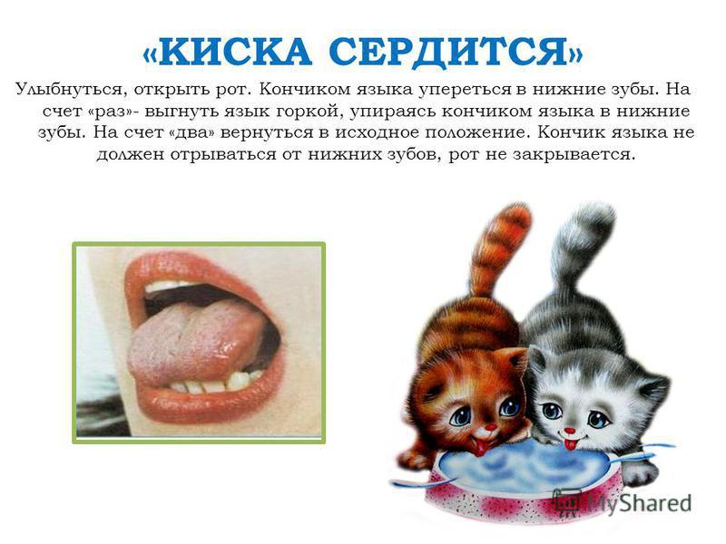 «КИСКА СЕРДИТСЯ» Улыбнуться, открыть рот. Кончиком языка упереться в нижние зубы. На счет «раз»- выгнуть язык горкой, упираясь кончиком языка в нижние зубы. На счет «два» вернуться в исходное положение. Кончик языка не должен отрываться от нижних зуб